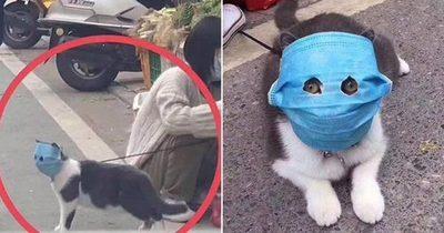 China: Ponen mascarilla a un gato para protegerlo del coronavirus