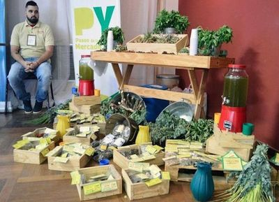Conformarán clúster de hierbas nativas del Paraguay
