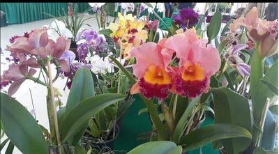 Feria de orquídeas sigue hasta la tarde de este sábado