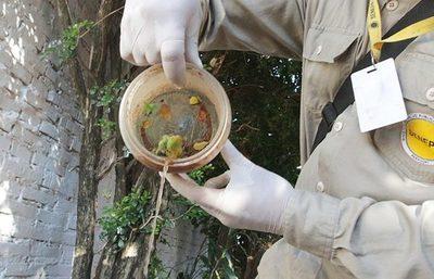 El 95% de los domicilios visitados tienen criaderos de mosquitos, según Senepa