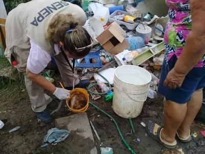 El 95% de las casas tienen criaderos de mosquitos, según reporte del Senepa