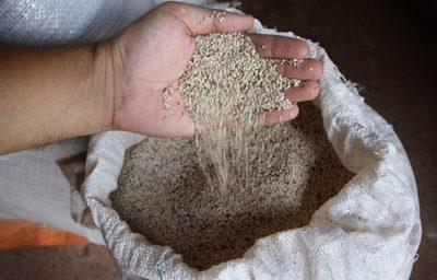 Firma paraguaya concreta exportación de chía y sésamo para la Unión Europea
