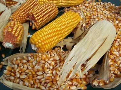 Tras un inicio negativo, sector agro espera mejora