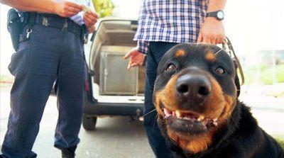 Investigan por omisión de auxilio a dueño de rottweiler que atacó a niño