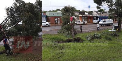 CAÍDA DE ÁRBOL EN MARIA AUXILIADORA TRAS TEMPORAL