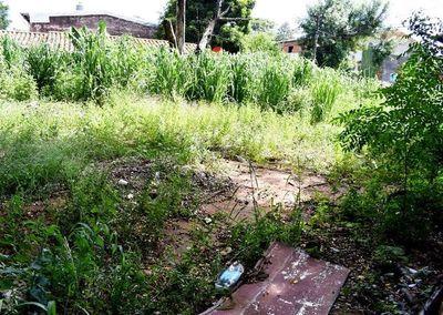 Minas de mosquitos en alrededores de colegios