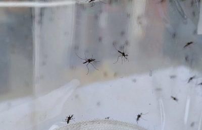 """Números increíbles: """"Paraguay atraviesa la peor epidemia de dengue"""""""