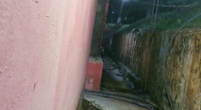 Ratas recorren en planta de tratamiento de agua