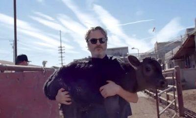 Joaquin Phoenix rescata a una vaca y su ternero de un matadero