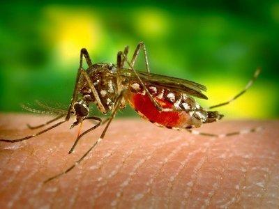 Dengue se asoma a pico histórico, confirman muerte de 20 infectados