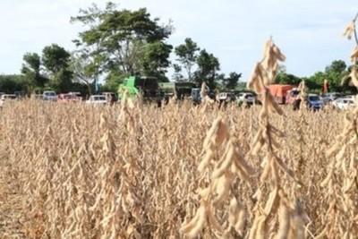 Se inició la cosecha de soja con gran participación de los pequeños productores