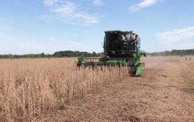 Periodo de cosecha de soja inicia con elevada rentabilidad
