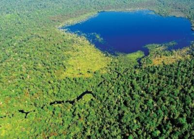 Pérdidas de biodiversidad están en niveles sin precedentes, según la ONU