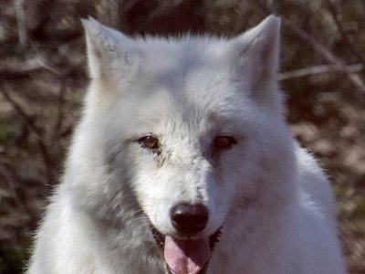 Osos, lobos y ganadería tradicional conviven en el santuario de Arcturos