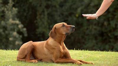 Por qué no debes gritarle a tu perro para educarlo