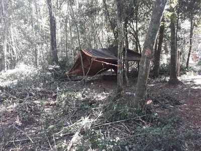 Denuncian invasión de reserva y tala ilegal de árboles en Puerto Indio