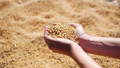 Solo el 21% de la siembra de soja utiliza semillas certificadas por el Senave