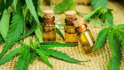 Cannabis medicinal: otorgan primeras licencias para su producción