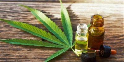 Empresas producirán cannabis medicinal