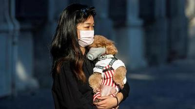 Hong Kong: un perro da positivo al coronavirus y es puesto en cuarentena