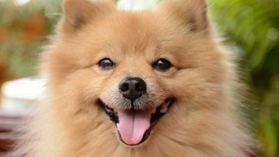 Mascota de una paciente con coronavirus se encuentra en cuarentena