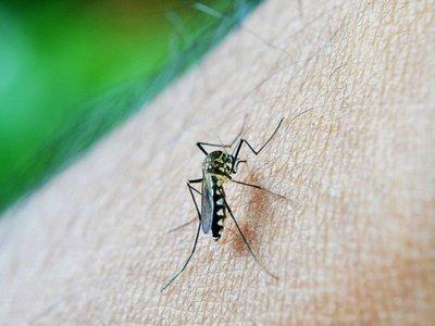 Confirman segunda muerte por dengue en Argentina en lo que va de 2020