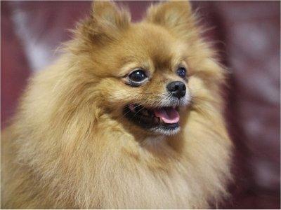 Un perro fue puesto en cuarentena, tras dar positivo al coronavirus