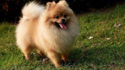 Un perro dio positivo al coronavirus