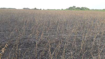Denuncian quema de sojales y destrucción de cosecha
