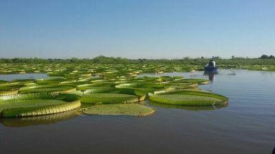 Jakare yrupê oipyso sa'y rovy'û río Paraguay jerére