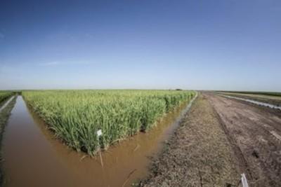 Proyectan transformar zonas inundables en tierras aptas para la producción agrícola