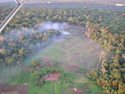 Bosque Atlántico: Deforestación se acentuó en los últimos años, sin acciones reales del Estado