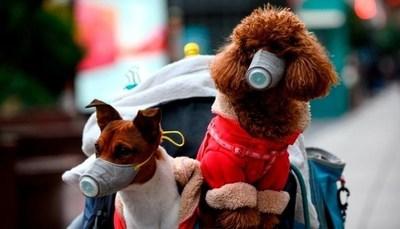 No se salva nadie: Confirman que perro dio positivo al coronavirus en Hong Kong