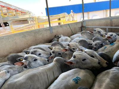 Precio del ganado a frigorífico cotiza US$ 0,5 menos en todas las categorías