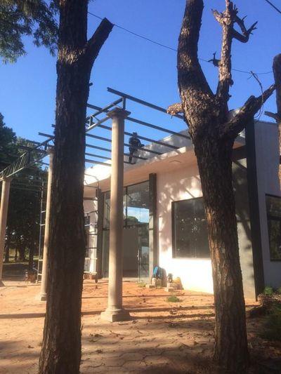 Denuncian tala indiscriminada de añosos árboles en PJC