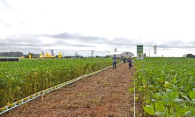 » JORNADA DE CAMPO DE SOJA SEM-AGRO: Informaciones precisas sobre cultivares más aptos
