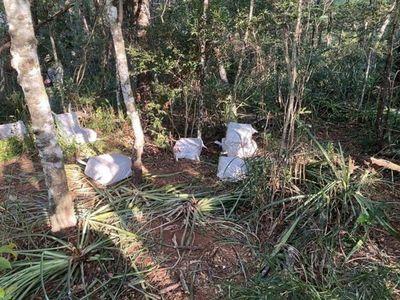 Fiscalía incauta 400 kilos de supuesta cocaína en Capitán Bado