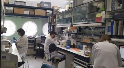 Científicos buscan vacuna contra el coronavirus