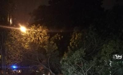 HOY / Árbol cayó tras tormenta y dejó sin luz a Ciudad Nueva