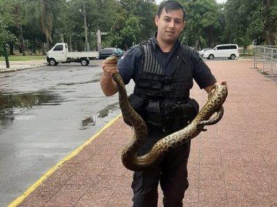Policías capturan kuriju de dos metros y medio cerca del Cabildo