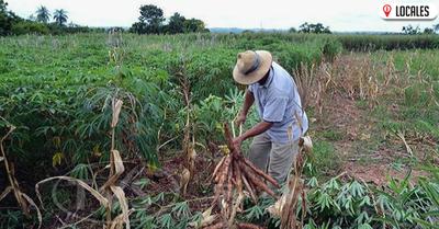 Productores de Cambyretá donan mandioca a las familias más vulnerables