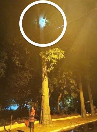 Trepó a un árbol para ganar guita y se quedó ahí