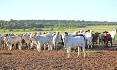 » Suspenden temporalmente la exportación de carne a la UE