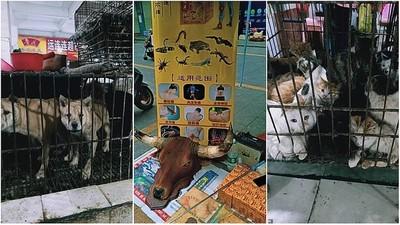 China: vuelven a vender carne de murciélago ni bien se levantó la cuarentena por coronavirus