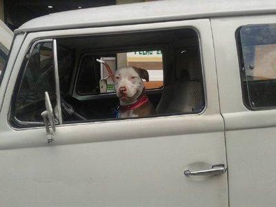 Tras persecución policial, arrestan a hombre que dejó a su perro al volante