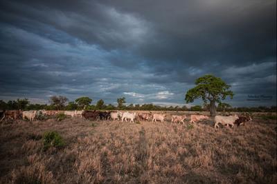 Meteorología anuncia una jornada extremadamente calurosa y con lluvias