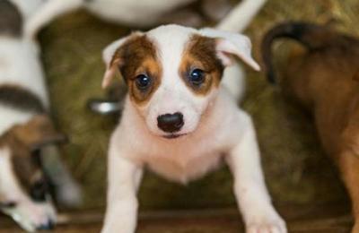 Efecto positivo: Cuarentena genera adopción masiva de cachorros en Nueva York