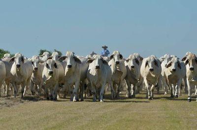 Sector ganadero plantean donar ganado para ayudar a familias vulnerables