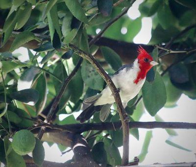 Fotografía a las aves de tu jardín