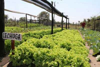 Paraguay confía en repunte agropecuario porque el mundo «requiere alimentos»